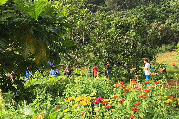 Breadfruit Agroforestry Students