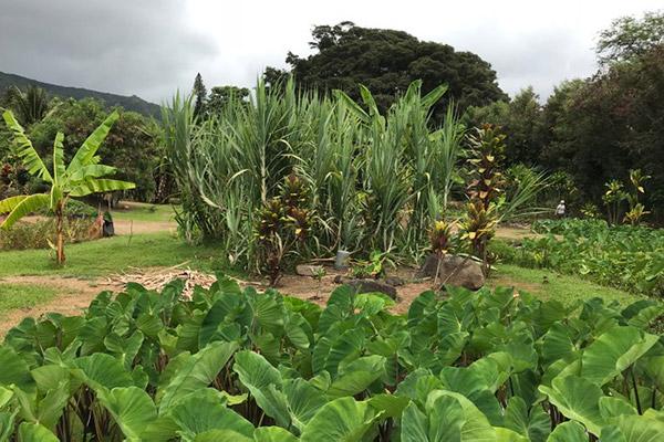 Maka'aka Farm, Waihe'e, Maui
