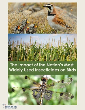 The-Impact-of-the-Nations-Most-Widely-Used-Insecticides-on-Birds