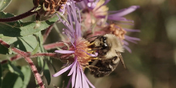 bee and flower - Beyond Pesticides