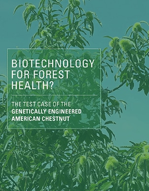 Biotechnology for Forest Health?