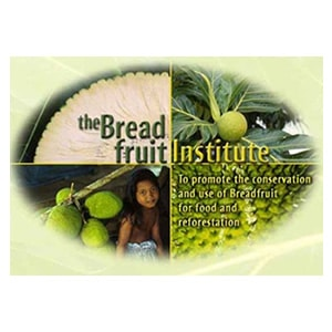 The Breadfruit Institute
