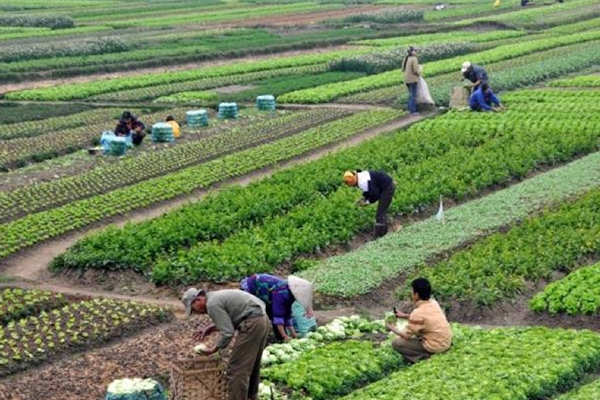 A successful GROW BIOINTENSIVE farm in Latin America