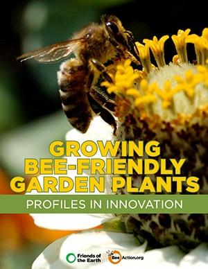 Growing Bee-Friendly Garden Plants